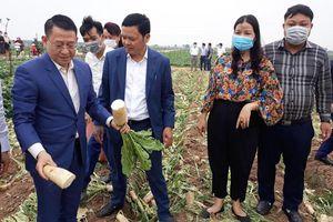 Kết nối tiêu thụ nông sản của xã Tráng Việt (huyện Mê Linh)