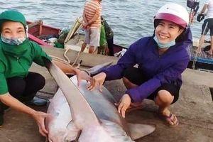 Bắt con cá lạ bán gần nghìn USD, trâu hồng hiếm có giá tiền tỷ