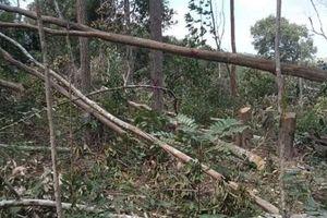 Đắk Lắk: Chuyển hồ sơ sang Công an vụ phá rừng giáp ranh với Gia Lai