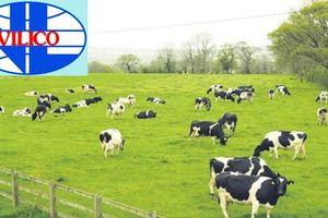 Sau sáp nhập GTN, Vilico sẽ đầu tư 1.700 tỷ đồng vào dự án chăn nuôi và phân phối thịt bò