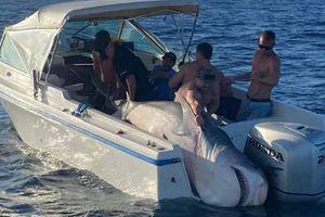 Giết cá mập hổ gần 400 kg, nhóm người bị chỉ trích ngu xuẩn và ích kỷ