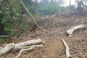 Xử lý nghiêm tổ chức, cá nhân để xảy ra phá rừng đặc dụng tại Vườn Quốc gia Xuân Sơn