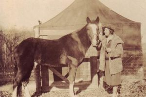 Con ngựa có khả năng ngoại cảm