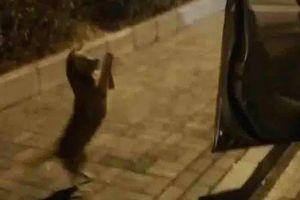 Chú chó rơi nước mắt khi được người đi đường cho ăn nhưng nhất quyết không chịu lên xe, nguyên nhân khiến ai cũng thương xót