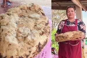 Người phụ nữ phát hiện khối long diên hương trị giá gần 6 tỷ