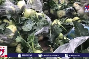 Hàng trăm ha rau màu ở vùng dịch Hưng Yên bị ế đọng