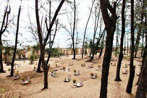 Nghĩa địa cá voi độc nhất Việt Nam