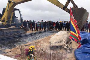 Cá voi nặng gần 1 tấn trôi dạt vào bờ biển Quảng Bình