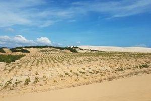 Bác dự án Centraland vì 'dính' 107 ha đất rừng và di tích quốc gia