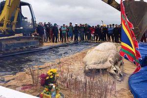 Cá voi nặng khoảng 2 tấn chết dạt vào bờ biển Quảng Bình