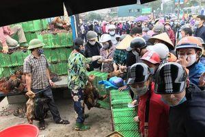 Người dân Hà Nội chung tay mua giải cứu gà đồi cho bà con Chí Linh, Hải Dương