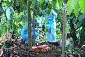 Vụ xương người vương vãi trong rẫy cà phê Đắk Lắk: Do thú hoang