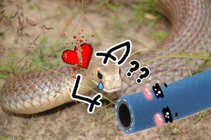 Chú rắn ngây thơ mê mải 'mây mưa' với ống nước thì bị bắt đi trong sự rối bời khôn tả