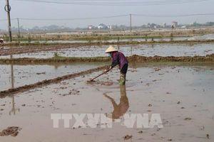 Đã đủ nước cho gieo cấy vụ Đông Xuân