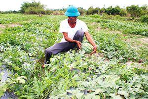 Tập trung chuyển đổi cơ cấu cây trồng