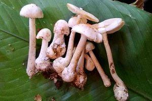 Ăn nấm cực độc, cả gia đình cùng nhập viện