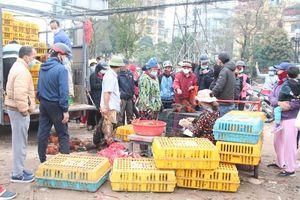 Hàng trăm người xếp hàng để 'giải cứu' gà đồi Chí Linh ở Hà Nội