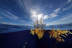 Vùng biển không bờ và bí ẩn về loạt xác tàu vô chủ trôi nổi