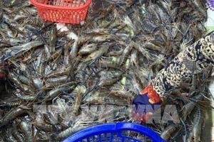 Doanh số tiêu thụ Thực phẩm Sao Ta tăng gần 10%
