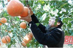 Năm 2021, huyện Thọ Xuân phấn đấu có thêm 5 sản phẩm OCOP cấp tỉnh