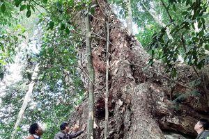 Tuyên Quang: Kiểm lâm rừng đặc dụng Na Hang quản lý và bảo vệ rừng
