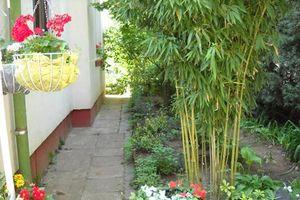 3 loại cây tuyệt đối không trồng trong nhà kẻo xui xẻo quanh năm