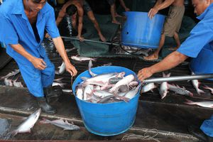 Ngành thủy sản: Chủ động đối mặt và thích nghi với 3 chữ 'biến'