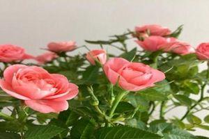 Những lời chúc ngày 8/3 dành cho người yêu khiến nàng cảm thấy mình đặc biệt vô cùng