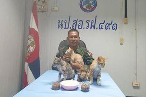 Thái Lan: Netizen 'tan chảy' vì hành động giải cứu 4 chú mèo khỏi tàu chìm của hải quân