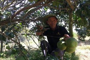Bình Dương: Chương trình nông thôn mới đi đúng hướng, vững chắc