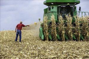 Giá ngô dẫn đầu đà tăng trên thị trường nông sản Mỹ