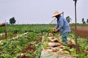 'Giải cứu' nông sản - bài học quản trị ngay từ vạch xuất phát