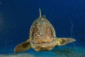 Sinh vật tái sinh sau 66 triệu năm tuyệt chủng: phát hiện phiên bản 'thủy quái'