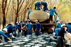 Việt Nam duy trì vị trí thứ 2 về xuất khẩu cao su vào Trung Quốc