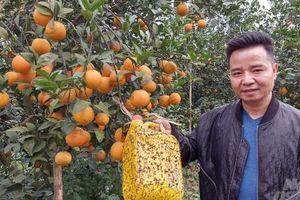 Nông nghiệp theo hướng hữu cơ gặp khó vì đầu ra chưa xứng