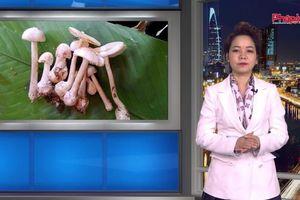 Bản tin Y tế: Chuyên gia y tế cảnh báo người dân tuyệt đối không hái nấm hoang dại ăn