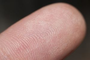 Thông tin về tổ tiên chúng ta nằm trong dấu vân tay?