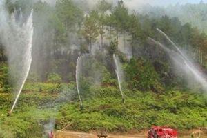 Chủ động phòng cháy và chữa cháy rừng trong mùa khô