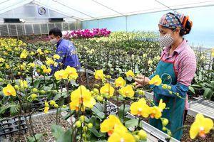 Cơ cấu lại ngành Nông nghiệp Thủ đô: Nâng cao chất lượng nông sản