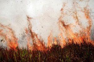 Hai phần ba rừng nhiệt đới toàn cầu đã bị phá hủy hoặc suy thoái