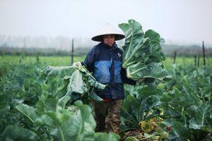 Mê Linh tìm hướng tiêu thụ nông sản