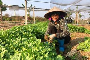 Hiệu quả từ mô hình sản xuất rau an toàn
