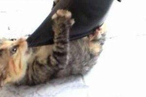 Từ 20/4, hành hạ tàn nhẫn chó, mèo bị phạt bao nhiêu tiền?