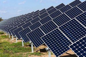 Khéo 'lướt sóng' dự án điện mặt trời như Nam Việt Energy