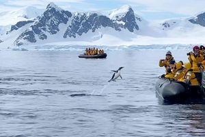 Bị đàn cá voi truy đuổi, chim cánh cụt nhanh trí nhảy lên thuyền lánh nạn