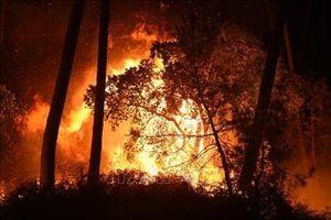 Cháy rừng nghiêm trọng tại Argentina, nhiều người mất tích