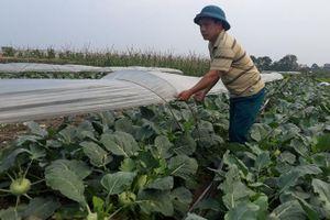 Giá rau xanh ở Hà Nội tăng trở lại