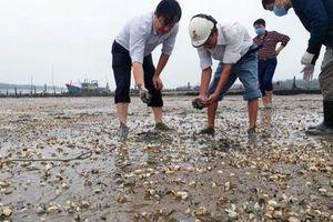 Xác định nguyên nhân ban đầu khiến ngao chết trắng bãi tại Thanh Hóa
