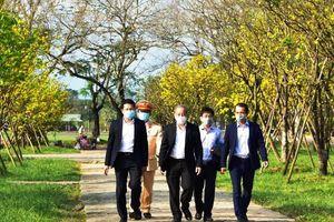 Xây dựng Thừa Thiên – Huế trở thành xứ sở mai vàng của Việt Nam