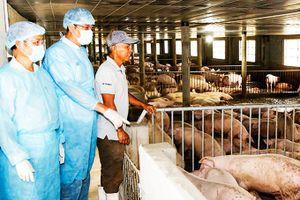 Phòng dịch gắn với chuyển đổi chăn nuôi